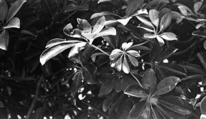 KodakAPSBW400_1