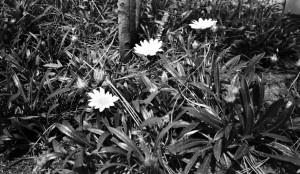 KodakAPSBW400_3